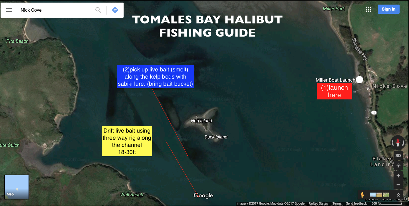 Tomales bay halibut fishing guide the lost anchovy for Tomales bay fishing report